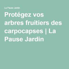 Protégez vos arbres fruitiers des carpocapses | La Pause Jardin