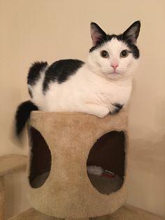 Cat Tree Cat Loaf