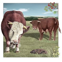 Bulls and a cow pat illustration by Alan Baker