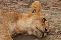 So sweet! Luangwa national park, Zambia