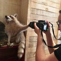 Please, no more pictures! Animal Jokes, Funny Animal Memes, Cute Funny Animals, Cute Baby Animals, Animals And Pets, Strange Animals, Great Ab Workouts, Pet Raccoon, Foto E Video