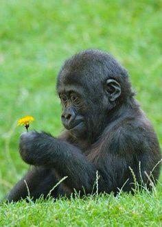 Admiring the flowers