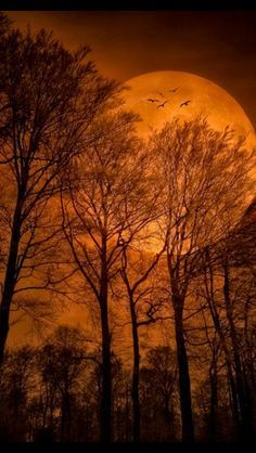 A big bright orange moon with bare tree silhouettes captures just what we think of in a harvest moon, stunning and slightly spooky.