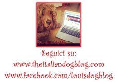Seguiteci su www.theitaliandogblog.com e sulla fan page di Facebook: www.facebook.com/louisdogblog
