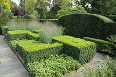 Boxwood structure