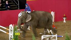The nimble no-fucks-given elephant rounds the last hurdle. - Imgur | Pinned by http://www.thismademelaugh.com