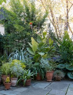 clustered terracotta pots each with just one type of foliage. clustered terracotta pots each with Small Courtyard Gardens, Terrace Garden, Back Gardens, Small Gardens, Garden Pots, Outdoor Gardens, Garden Ideas, Jungle Gardens, Backyard Ideas For Small Yards