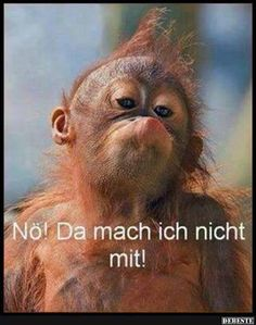 Lustige Bilder und Sprüche, tolle Witze und alles was Spaß macht. Täglich neu Funny pictures and sayings, great jokes and everything that is fun. Cute Baby Animals, Animals And Pets, Funny Animals, Primates, Beautiful Creatures, Animals Beautiful, Monkey Pose, Silly Faces, Tier Fotos