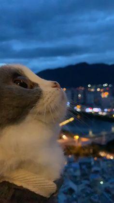 Weather with cute cat😍🐱 - Katzenrassen Beautiful Cats Cute Funny Animals, Cute Baby Animals, Animals And Pets, Funny Cats, Cute Dogs, Anime Animals, Cute Cats And Kittens, I Love Cats, Kittens Cutest