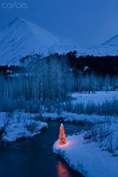 Lit Christmas Tree On The Bank Of A Stream During Winter In Southcentral Alaska