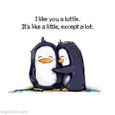 Love these Penguins a lottle.