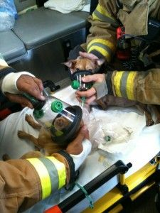 Florida firefighters rescue two dogs from trailer fire. | Shared by LION