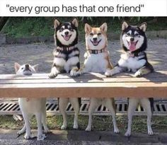 Don't forget to share these hilarious animal memes with a fellow pet-lover! Read More: Dog Memes Of The Day 30 Pics – Funny Animal Memes, Cute Funny Animals, Funny Animal Pictures, Funny Relatable Memes, Funny Cute, Funny Photos, Funny Dogs, Puns Hilarious, Funny Friend Memes