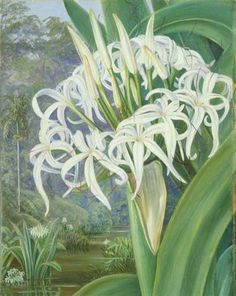 Your Paintings - Marianne North paintings