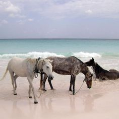 horses on Harbour Island's Pink Sand Beach