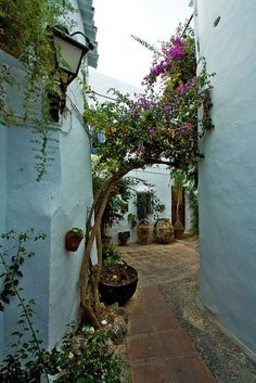 White walls of Frigiliana, Andalusia, Spain | Aurelien, on Flickr.