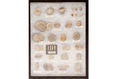 Collection of Swiss Fossils ($350.00)  $249.00  OneKingsLane.com