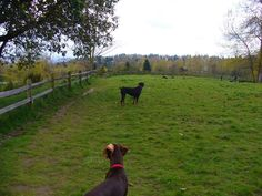Mountain View kent, Wa Dog park