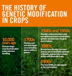 The history of genetic modification in crops.