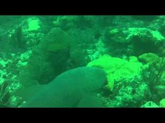 Video of the Great Barrier Reef