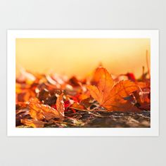 Autumnlights Art Print by Originalaufnahme - $18.00  #posters #artworks #graphic design #texture #inspiration #artists #stretched canvas #illustrations #room #products #pretty #colour #inspiration #Wall Art #Home Decor #Throw Pillows #Cards #Mugs #Shower Curtains #Wall Tapestries#Duvet Covers #Rugs #Wall Clocks #Art Prints #Framed Art Prints #Canvas Prints #Editions #Wall Tapestries