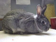 RSPCA Little Valley Animal Shelter Exeter Devon Adopt A Rabbit