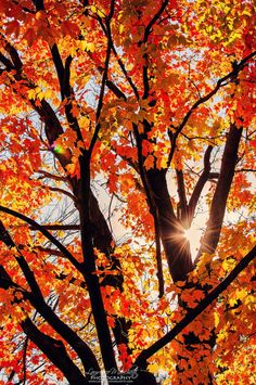 Fall already (by Laurence Marchetti)