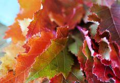 Herbst-Lampion