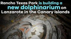 Petition · http://hardtoport.org/: Say No to the new to build dolphinarium Lanzarote, the Canary Islands · Change.org