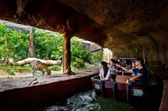 cats that ride on boats | can embark on the Amazon River Quest from 10.00am to 5.00pm. Boat ride ...