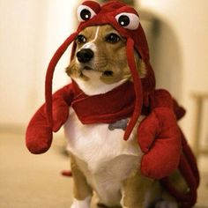 Pin for Later: 25 LOL-Worthy Dogs Dressed as Food Lobster