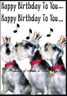 miniature schnauzer easter wishes Happy Birthday Wishes Cards, Happy Birthday Dog, Happy Birthday Pictures, Happy 1st Birthdays, Birthday Messages, Birthday Greetings, Schnauzer Puppy, Miniature Schnauzer, Facebook Birthday