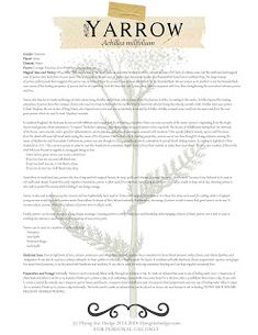 Magical and medicinal uses of Yarrow. Includes FREE BOS page! Green Witchcraft, Magick Spells, Wicca Witchcraft, Wiccan, Magic Herbs, Herbal Magic, Healing Herbs, Medicinal Plants, Witch Herbs