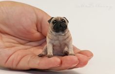 Sold for a mere $132.00 what a deal! OOAK Realistic Handmade ~ Pug Dog ~ Miniature Dollhouse Sculpture in Dolls & Bears, Dollhouse Miniatures, Artist Offerings | eBay