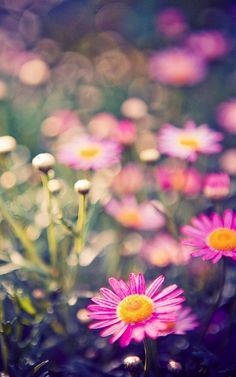 Pink • Flowers