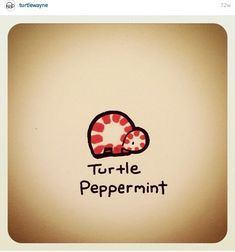 Turtle Peppermint @turtlewayne