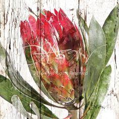 Medium Repens Protea 2 - White & Brown. Geite en Goeters Protea Art, Protea Flower, Flower Art, Art Flowers, Art Journal Inspiration, Mixed Media Art, Diy And Crafts, Wall Art, Aloe