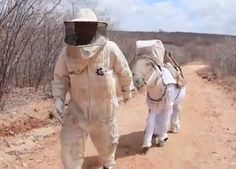 Manuel Juraci, designed the head-to-toe beekeeping suit for his donkey to increase honey production in Itatira, Brazil. Hives And Honey, Honey Bees, Beekeeping Equipment, Raising Bees, Bee Boxes, Bee Farm, Family Traditions, Queen Bees, Bee Keeping