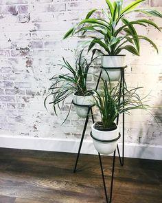 64 plant stand design ideas for indoor houseplants 21 - coodecors House Plants Decor, Plant Decor, Living Room Plants Decor, Easy House Plants, Jade Plants, Bamboo Plants, Desert Plants, Flowering Plants, Tropical Plants