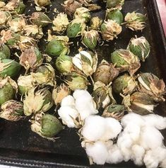 This years experiment; Seed pods starting to burst after being brought inside for drying Farm Store Growing Cotton, Farm Store, Seed Pods, Experiment, Sprouts, Organic Cotton, Seeds, Fiber, Vegetables
