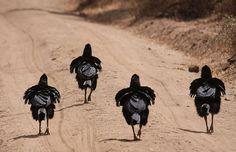 Como todos os anos, o concurso de fotografia da Comédia da Vida Selvagem oferece uma deliciosa seleção de fotografias de espécies de animais diferentes.