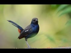 ▶ Abraham Hicks ~ The Universe Always Provides Signs , Pay Attention - YouTube