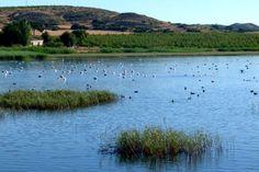 Castilla-La Mancha permite la caza en lagunas con malvasías | Revista Quercus