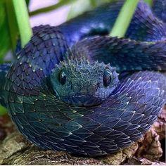 Da cutest danger noodle via /r/aww Baby Animals Super Cute, Pretty Animals, Cute Little Animals, Cute Funny Animals, Animals Beautiful, Pretty Snakes, Cool Snakes, Beautiful Snakes, Scary Snakes