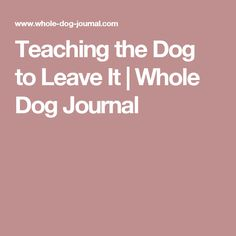 Teaching the Dog to Leave It | Whole Dog Journal