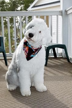 Tanzie an Old English Sheepdog needs a sitter Needed township, Kingston Ontario Canada Oct For till November Silly Dogs, Cute Dogs, Old English Sheepdog Puppy, Doggie Bag, Kingston Ontario, November 19th, Sheep Dogs, Totems, Age 3