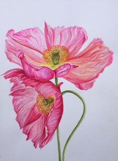 Pink poppies Watercolour Flowers, Watercolor Drawing, Watercolor Paintings, Graphic Quotes, Art Quotes, Pink Poppies, Botanical Art, Watercolours, Graphic Illustration