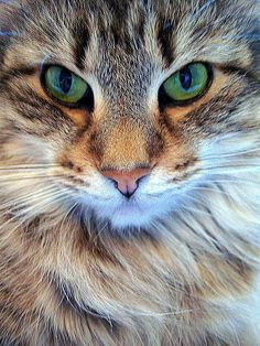 This #cat has such beautiful eyes