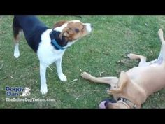 3 Surprising Tips That Will Make Your Dog Do What You Say! - Smart Monkey Fitness