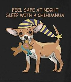 Feel safe at night, sleep with a chihuahua .
